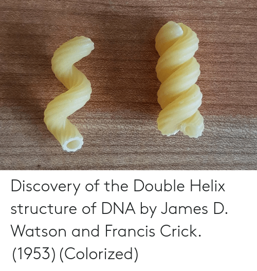 the double: Discovery of the Double Helix structure of DNA by James D. Watson and Francis Crick. (1953)(Colorized)