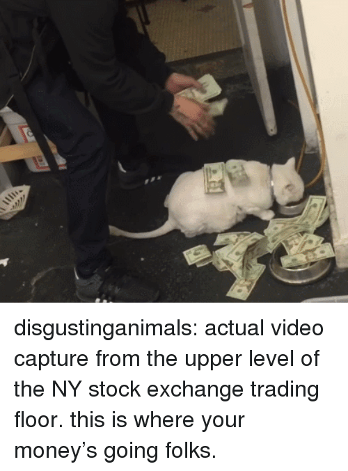 trading: disgustinganimals: actual video capture from the upper level of the NY stock exchange trading floor. this is where your money's going folks.