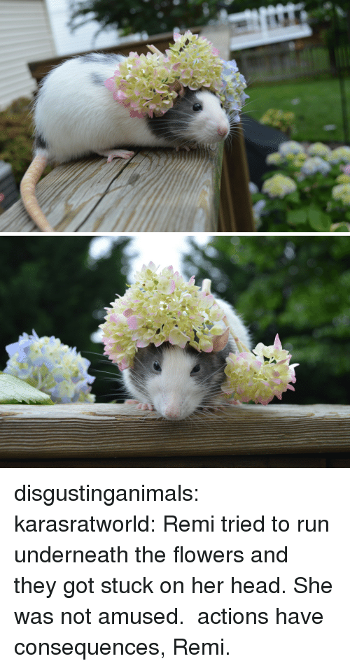 Not Amused: disgustinganimals:  karasratworld:  Remi tried to run underneath the flowers and they got stuck on her head. She was not amused.  actions have consequences, Remi.