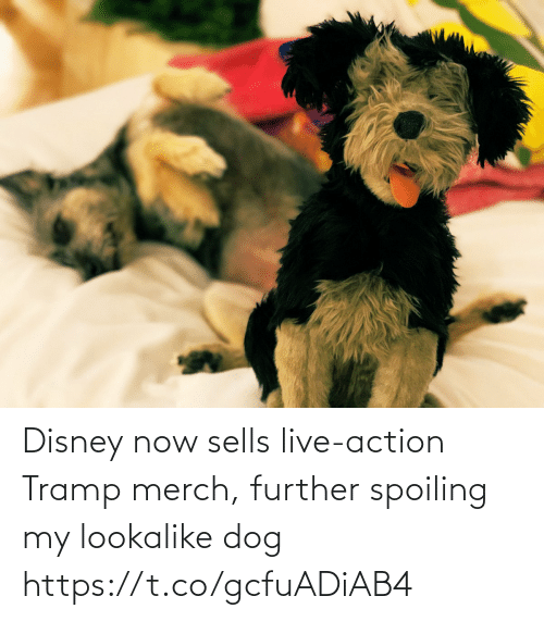 Live Action: Disney now sells live-action Tramp merch, further spoiling my lookalike dog https://t.co/gcfuADiAB4