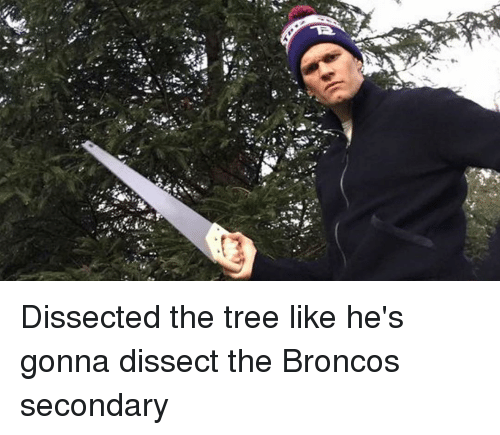 Broncos: Dissected the tree like he's gonna dissect the Broncos secondary
