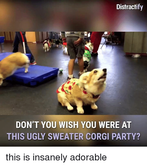 ugly sweaters: Distractify  DON'T YOU WISH YOU WERE AT  THIS UGLY SWEATER CORGI PARTY? this is insanely adorable