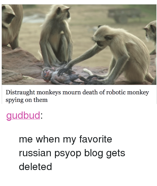 "Tumblr, Blog, and Death: Distraught monkeys mourn death of robotic monkey  spying on them <p><a href=""https://gudbud.tumblr.com/post/172389350233/me-when-my-favorite-russian-psyop-blog-gets"" class=""tumblr_blog"">gudbud</a>:</p><blockquote><p>me when my favorite russian psyop blog gets deleted</p></blockquote>"