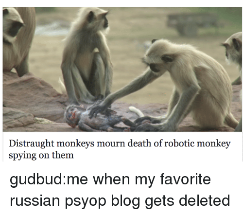 Robotic: Distraught monkeys mourn death of robotic monkey  spying on them gudbud:me when my favorite russian psyop blog gets deleted