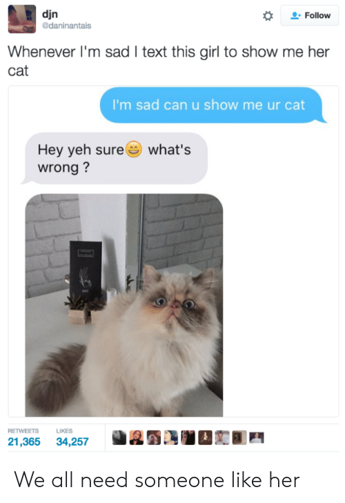 Yeh: djn  daninantais  *  으. Follow  Whenever I'm sad I text this girl to show me her  cat  I'm sad can u show me ur cat  Hey yeh sure  wrong?  what's  RETWEETS LIKES  21,365 34,257 We all need someone like her