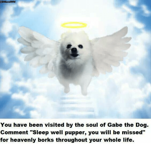 "Gabe: @DMandWM  You have been visited by the soul of Gabe the Dog.  Comment ""Sleep well pupper, you will be missed""  for heavenly borks throughout your whole life"