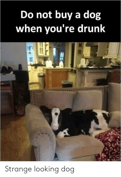 Youre Drunk: Do not buy a dog  when you're drunk Strange looking dog