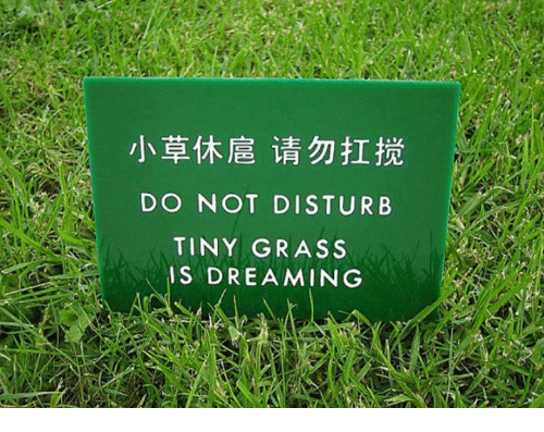 Memes, 🤖, and Disturbed: DO NOT DISTURB  TINY GRASS  IS DREAMING