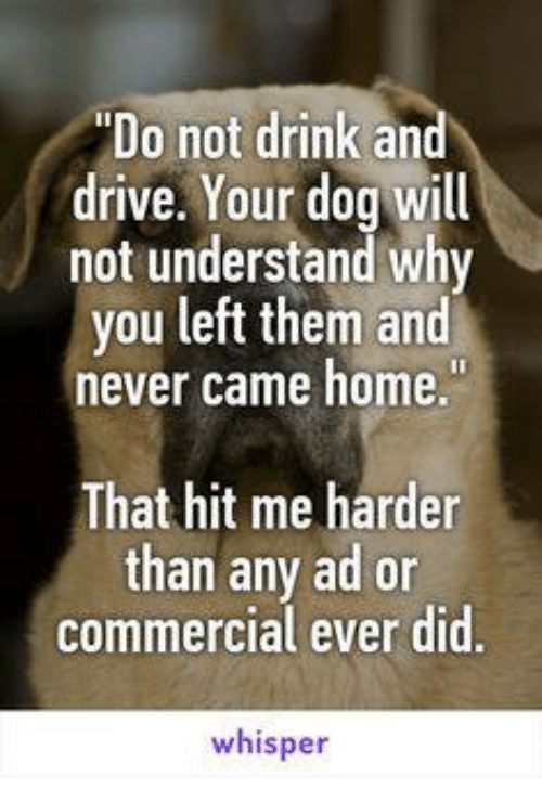 essay on why not to drink and drive Don't drink and drive one reason: adult drivers hear the same message although it may not be so blunt, depending on the source of the message.
