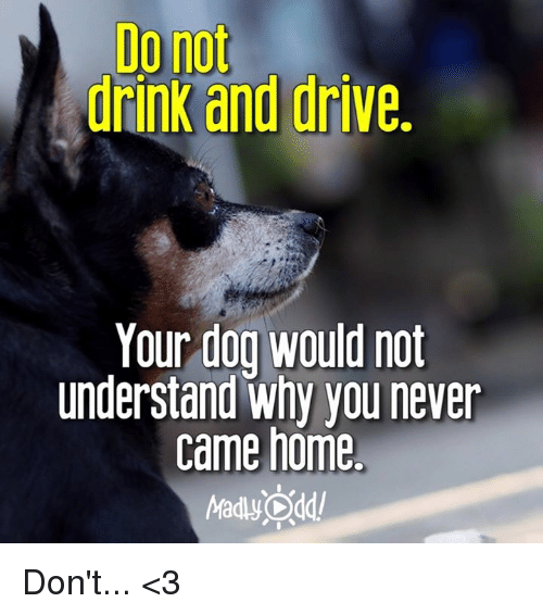 drinking and driving: Do not  drinK and drive.  Your dog Would not  understand why you never  came home  Madly Odd! Don't...  <3
