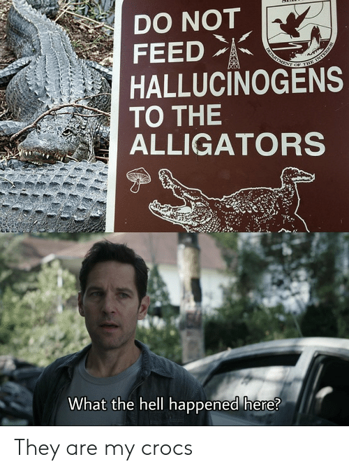 department: DO NOT  FEED  DEPARTMENT OF THE INTERIOR  HALLUCINOGENS  TO THE  ALLIGATORS  What the hell happened here? They are my crocs