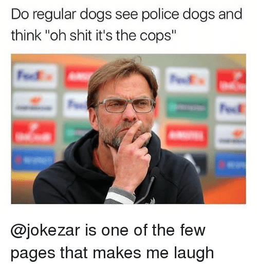 "Dogs, Police, and Shit: Do regular dogs see police dogs and  think ""oh shit it's the cops"" @jokezar is one of the few pages that makes me laugh"