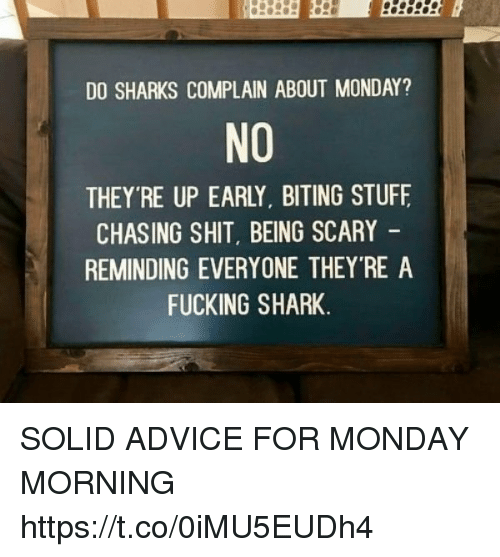 Advice, Fucking, and Funny: DO SHARKS COMPLAIN ABOUT MONDAY?  NO  THEY'RE UP EARLY. BITING STUFE  CHASING SHIT BEING SCARY  REMINDING EVERYONE THEY'RE A  FUCKING SHARK SOLID ADVICE FOR MONDAY MORNING https://t.co/0iMU5EUDh4