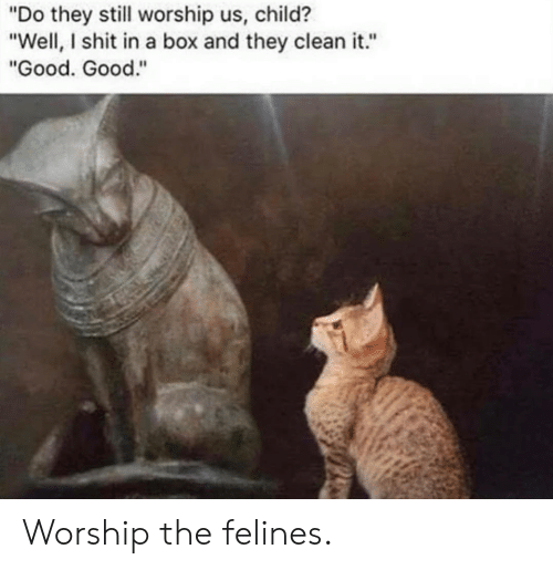 "worship: ""Do they still worship us, child?  ""Well, I shit in a box and they clean it.""  ""Good. Good."" Worship the felines."