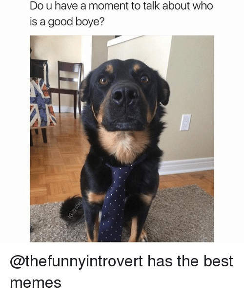 Funny, Memes, and Best: Do u have a moment to talk about who  is a good boye? @thefunnyintrovert has the best memes
