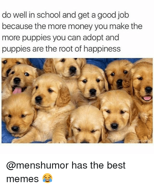 Funny, Memes, and Money: do well in school and get a good job  because the more money you make the  more puppies you can adopt and  puppies are the root of happiness @menshumor has the best memes 😂