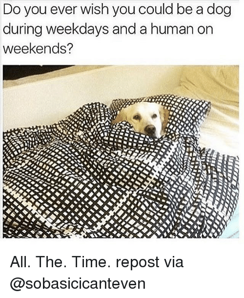 Memes, All the Time, and 🤖: Do you ever wish you could be a dog  during weekdays and a human on  weekends? All. The. Time. repost via @sobasicicanteven