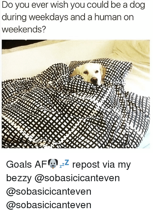 Funny, Weekday, and Weekender: Do you ever wish you could be a dog  during weekdays and a human on  weekends? Goals AF🐶💤 repost via my bezzy @sobasicicanteven @sobasicicanteven @sobasicicanteven