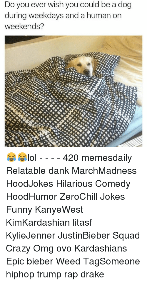 Memes, 🤖, and Weeds: Do you ever wish you could be a dog  during weekdays and a human on  weekends? 😂😂lol - - - - 420 memesdaily Relatable dank MarchMadness HoodJokes Hilarious Comedy HoodHumor ZeroChill Jokes Funny KanyeWest KimKardashian litasf KylieJenner JustinBieber Squad Crazy Omg ovo Kardashians Epic bieber Weed TagSomeone hiphop trump rap drake