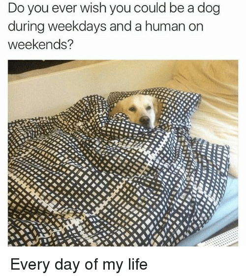 Memes, 🤖, and Human: Do you ever wish you could be a dog  during weekdays and a human on  weekends? Every day of my life