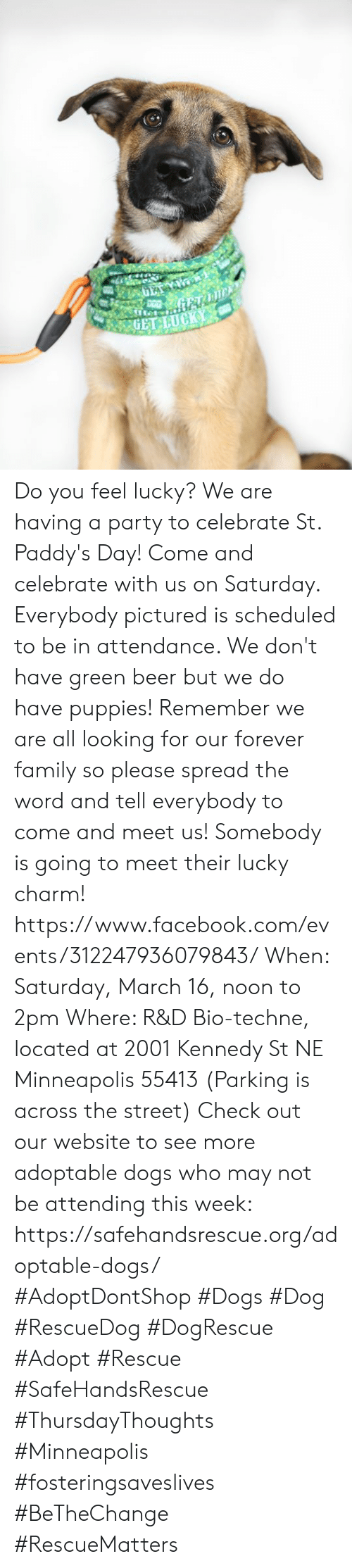 do you feel lucky: Do you feel lucky? We are having a party to celebrate St. Paddy's Day! Come and celebrate with us on Saturday. Everybody pictured is scheduled to be in attendance. We don't have green beer but we do have puppies! Remember we are all looking for our forever family so please spread the word and tell everybody to come and meet us! Somebody is going to meet their lucky charm!  https://www.facebook.com/events/312247936079843/ When: Saturday, March 16, noon to 2pm  Where: R&D Bio-techne, located at 2001 Kennedy St NE Minneapolis 55413 (Parking is across the street)  Check out our website to see more adoptable dogs who may not be attending this week: https://safehandsrescue.org/adoptable-dogs/  #AdoptDontShop #Dogs #Dog #RescueDog #DogRescue #Adopt #Rescue #SafeHandsRescue #ThursdayThoughts  #Minneapolis #fosteringsaveslives #BeTheChange #RescueMatters