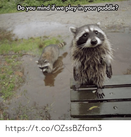 Do You Mind If: Do you mind if we play in your puddle? https://t.co/OZssBZfam3