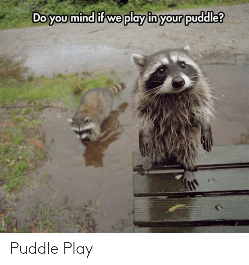 Do You Mind If: Do you mind if we play in your puddle? Puddle Play