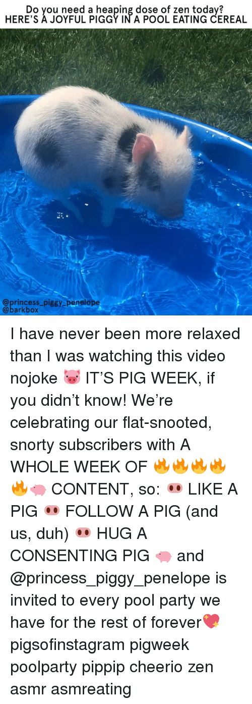 Memes, Party, and Forever: Do you need a heaping dose of zen today?  HERE'S A JOYFUL PIGGY IN A POOL EATING CEREAL  @princess_piggy penelope  @barkbox I have never been more relaxed than I was watching this video nojoke 🐷 IT'S PIG WEEK, if you didn't know! We're celebrating our flat-snooted, snorty subscribers with A WHOLE WEEK OF 🔥🔥🔥🔥🔥🐖 CONTENT, so: 🐽 LIKE A PIG 🐽 FOLLOW A PIG (and us, duh) 🐽 HUG A CONSENTING PIG 🐖 and @princess_piggy_penelope is invited to every pool party we have for the rest of forever💖 pigsofinstagram pigweek poolparty pippip cheerio zen asmr asmreating