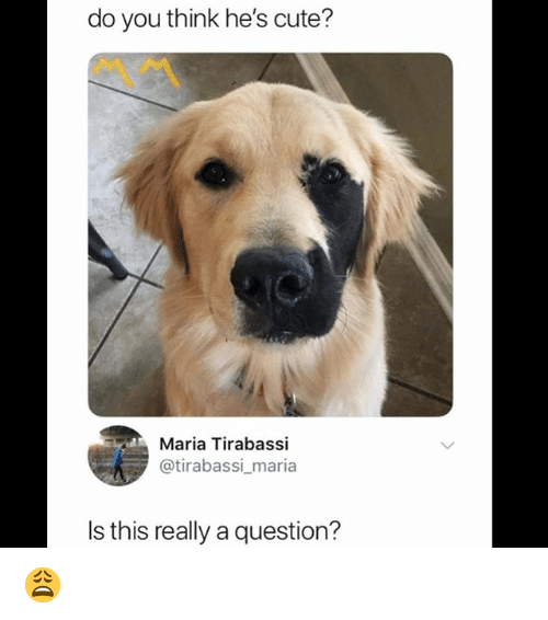 Cute, Memes, and 🤖: do you think he's cute?  Maria Tirabassi  @tirabassi maria  Is this really a question? 😩
