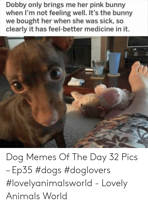 dobby: Dobby only brings me her pink bunny  when I'm not feeling well. It's the bunny  we bought her when she was sick, so  clearly it has feel-better medicine in it. Dog Memes Of The Day 32 Pics – Ep35 #dogs #doglovers #lovelyanimalsworld - Lovely Animals World