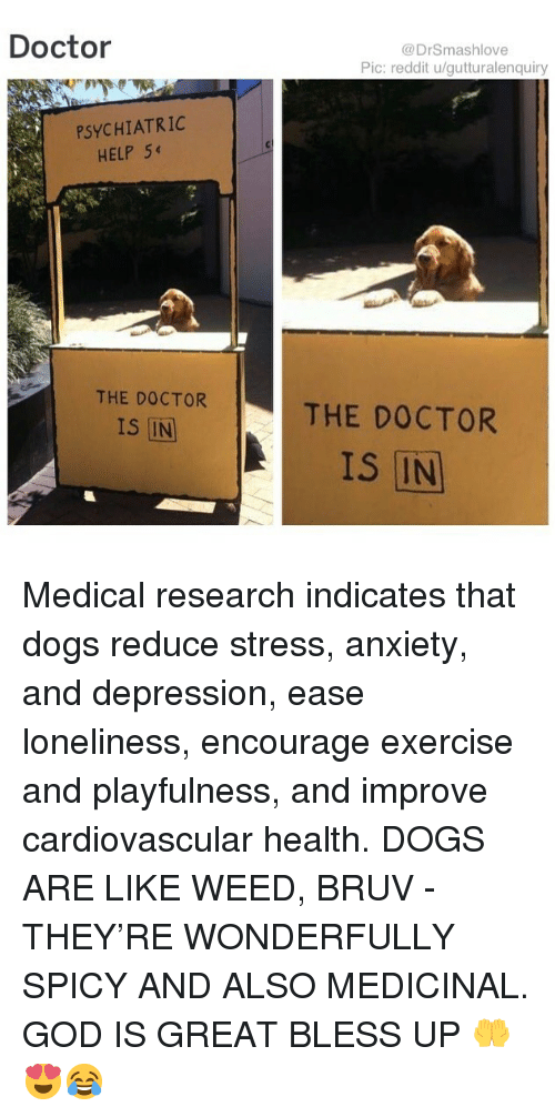 Bless Up, Doctor, and Dogs: Doctor  @DrSmashlove  Pic: reddit u/gutturalenquiry  PSYCHIATRIC  HELP 54  THE DOCTOR  THE DOCTOR  IS IN  IS IN Medical research indicates that dogs reduce stress, anxiety, and depression, ease loneliness, encourage exercise and playfulness, and improve cardiovascular health. DOGS ARE LIKE WEED, BRUV - THEY'RE WONDERFULLY SPICY AND ALSO MEDICINAL. GOD IS GREAT BLESS UP 🤲😍😂