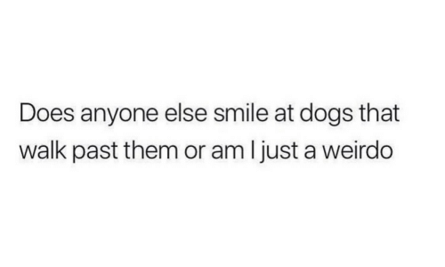 walk past: Does anyone else smile at dogs that  walk past them or am ljust a weirdo
