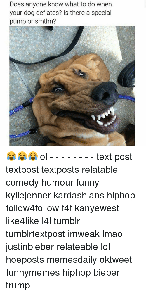 Relatible: Does anyone know what to do when  your dog deflates? Is there a special  pump or smthn? 😂😂😂lol - - - - - - - - text post textpost textposts relatable comedy humour funny kyliejenner kardashians hiphop follow4follow f4f kanyewest like4like l4l tumblr tumblrtextpost imweak lmao justinbieber relateable lol hoeposts memesdaily oktweet funnymemes hiphop bieber trump