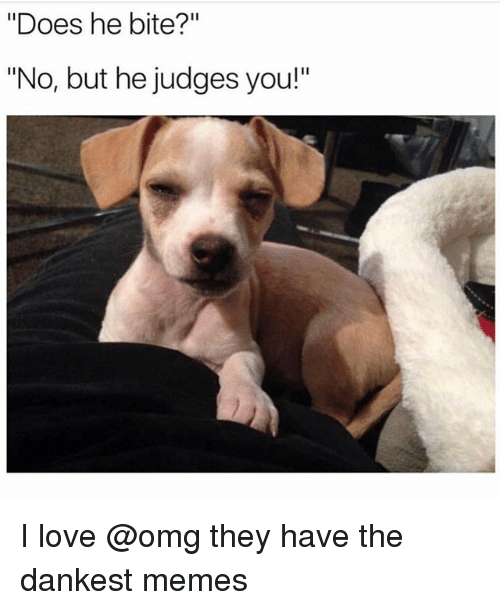 """Dankest: """"Does he bite?""""  """"No, but he judges you!"""" I love @omg they have the dankest memes"""