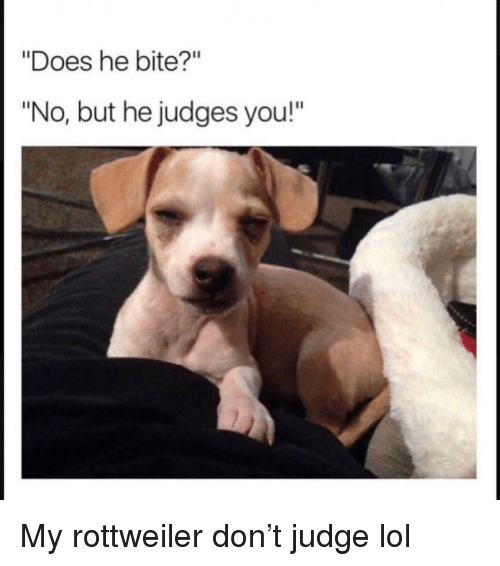 "Funny, Lol, and Rottweiler: ""Does he bite?""  ""No, but he judges you!"" My rottweiler don't judge lol"