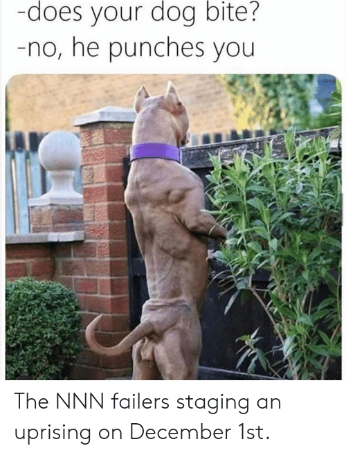 Does Your Dog Bite: -does your dog bite?  -no, he punches you The NNN failers staging an uprising on December 1st.