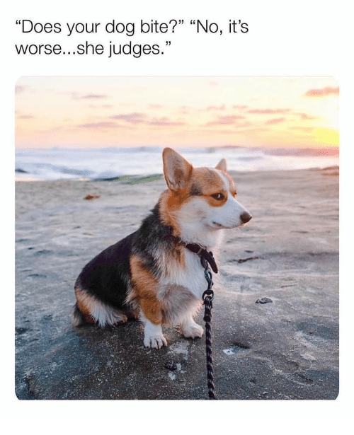 """Does Your Dog Bite: """"Does your dog bite?"""" """"No, it's  worse...she judges."""""""