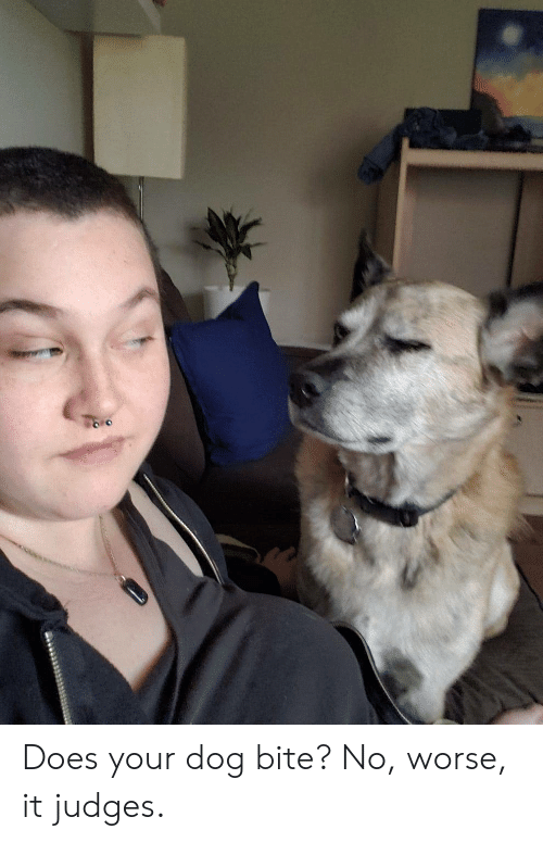 Does Your Dog Bite: Does your dog bite? No, worse, it judges.