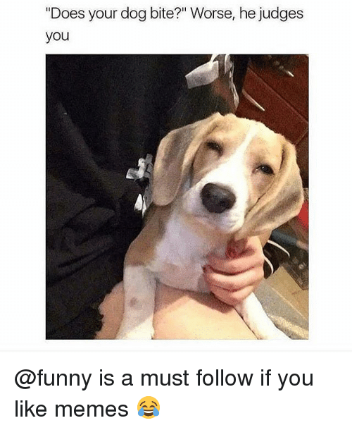 """Does Your Dog Bite: """"Does your dog bite?"""" Worse, he judges  you @funny is a must follow if you like memes 😂"""