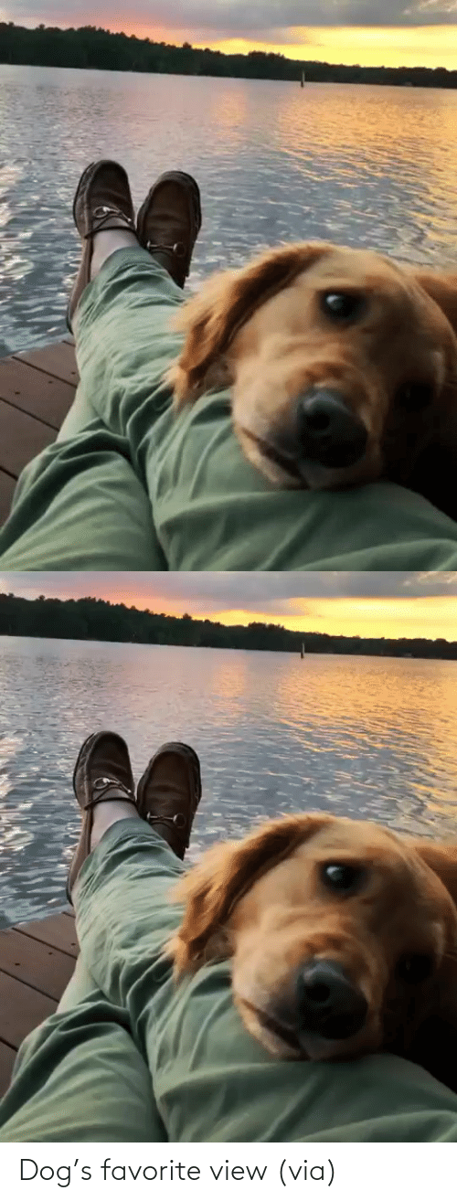 Dog: Dog's favorite view (via)