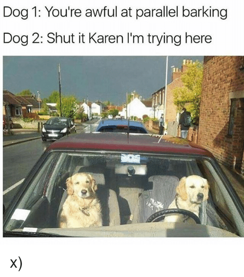 Memes, 🤖, and Dog: Dog 1: You're awful at parallel barking  Dog 2: Shut it Karen I'm trying here x)