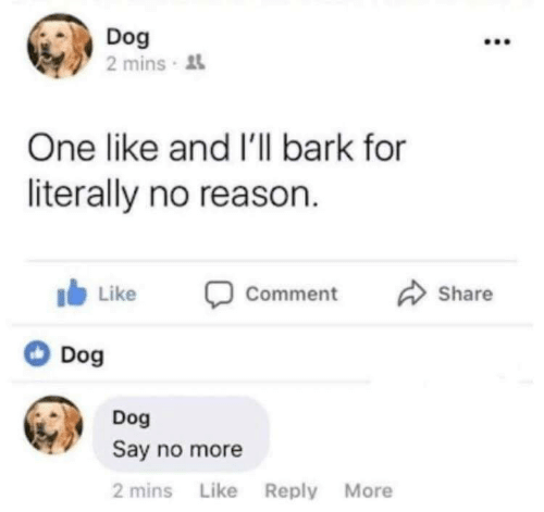 Say No More: Dog  2 mins  One like and I'l bark for  literally no reason  Share  Like  Comment  Dog  Dog  Say no more  2 mins Like Reply More
