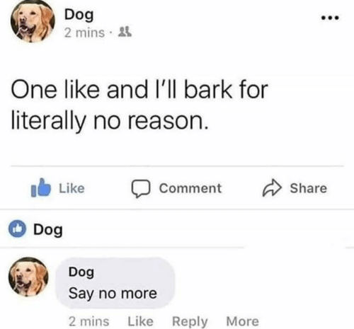 Say No More: Dog  2 mins  One like and I'll bark for  literally no reason.  I Like Comment  Dog  Share  Dog  Say no more  2 mins Like Reply More
