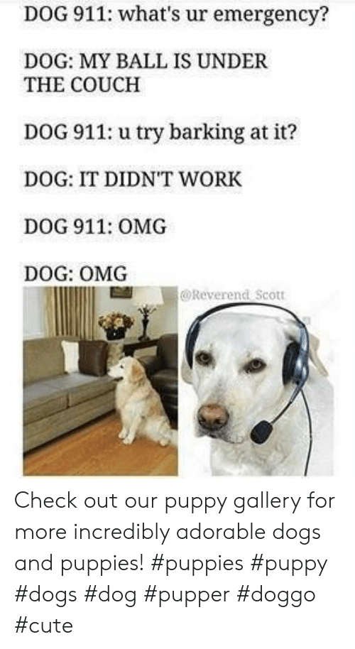 Pupper Doggo: DOG 911: what's ur emergency?  DOG: MY BALL IS UNDER  THE COUCH  DOG 911: u try barking at it?  DOG: IT DIDNT WORK  DOG 911: OMG  DOG: OMG  @Reverend Scott Check out our puppy gallery for more incredibly adorable dogs and puppies! #puppies #puppy #dogs #dog #pupper #doggo #cute