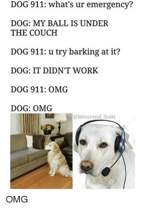 Dank and 🤖: DOG 911: what's ur emergency?  DOG: MY BALL IS UNDER  THE COUCH  DOG 911: u try barking at it?  DOG: IT DIDN'T WORK.  DOG 911: OMG.  DOG: OMG  E Reverend Scott OMG