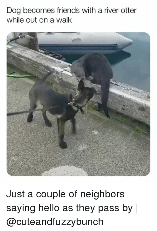 Friends, Hello, and Memes: Dog becomes friends with a river otter  while out on a walk Just a couple of neighbors saying hello as they pass by | @cuteandfuzzybunch