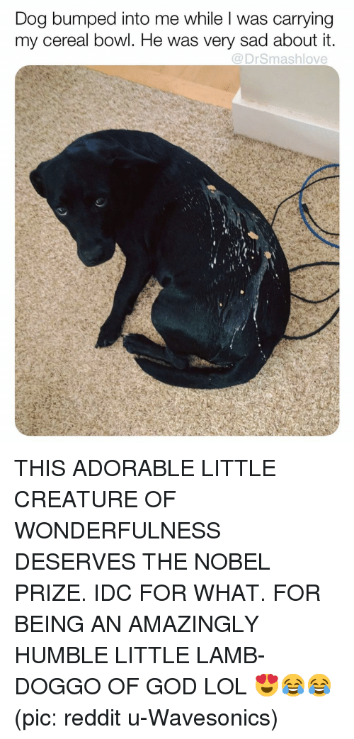 Nobel Prize: Dog bumped into me while l was carrying  my cereal bowl. He was very sad about it  @DrSmashlove THIS ADORABLE LITTLE CREATURE OF WONDERFULNESS DESERVES THE NOBEL PRIZE. IDC FOR WHAT. FOR BEING AN AMAZINGLY HUMBLE LITTLE LAMB-DOGGO OF GOD LOL 😍😂😂 (pic: reddit u-Wavesonics)