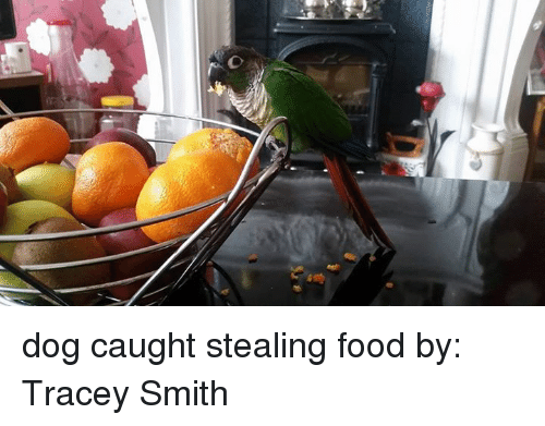 stealing food: dog caught stealing food  by: Tracey Smith