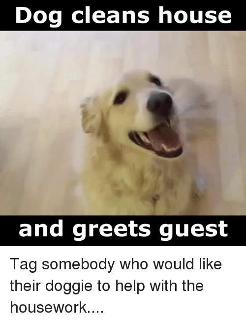 Dog Cleans House And Greets Guest
