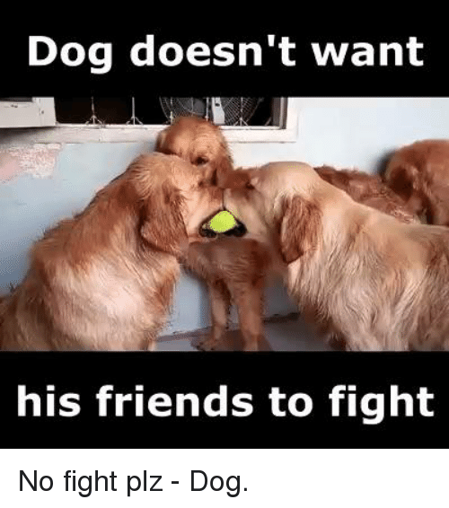 No Fighting: Dog doesn't want  his friends to fight No fight plz - Dog.